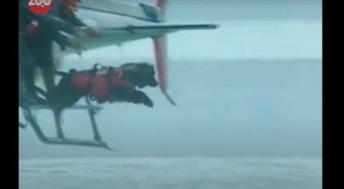 ヘリから海に飛び込む犬