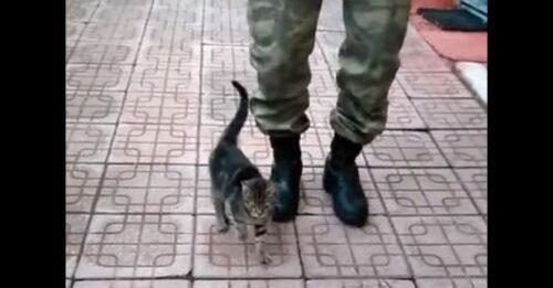 兵隊と足踏みする猫