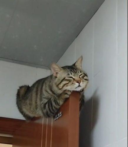 ドアの上で寝る猫