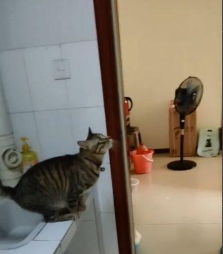 何かに飛び乗ろうとしている猫